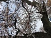 福井片町 lounge MICHIRU/ クラブ スナック バー ラウンジ